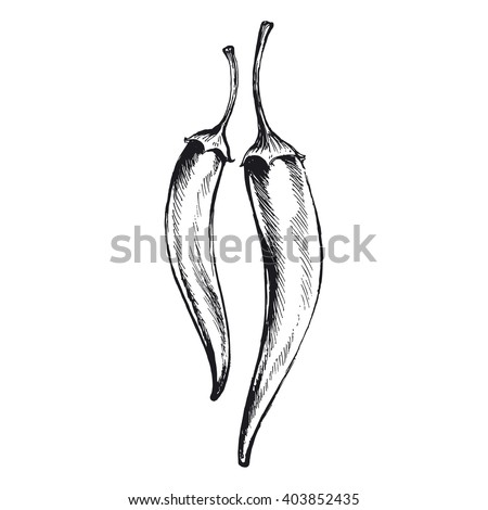 chili pepper, vector illustration of hot peppers - stock vector