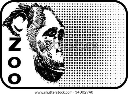 chimpanzee - stock vector
