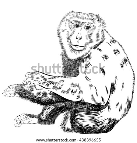 Chimpanzee drawing vector. Animal artistic, use for your design.