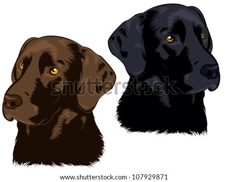 Chocolate and Black Labs - stock vector