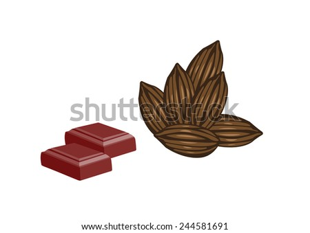 Chocolate and Cacao Fruit. Vector Illustration - stock vector