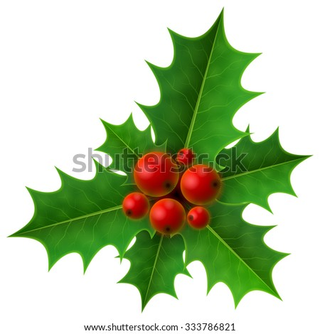 Christmas holly berry isolated on white background. Holly fruits bunch with leaves. Vector illustration for christmas, new year's day, decoration, winter holiday, design, new year's eve, plants, etc - stock vector