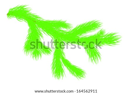 Christmas tree branch - stock vector