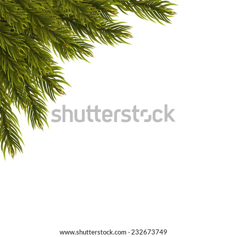 Christmas tree branch on a white background - stock vector