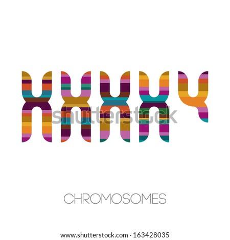 Chromosomes, vector illustration - stock vector
