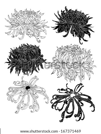 Chrysanthemum drawn in pen and ink style