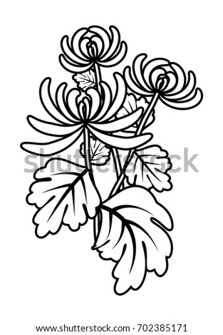 Chrysanthemum Flower Outline Coloring Book With Beautiful Flowers Cartoon Vector Illustration For Children Education