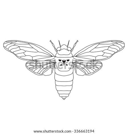 Cicada Cicadidae Sketch Of Isolated On White Background Design