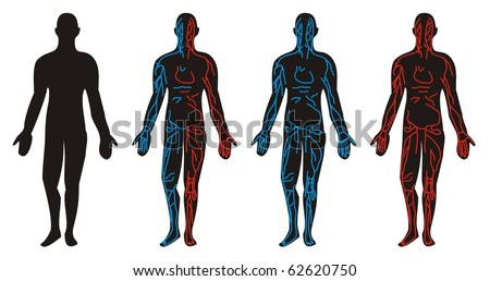 Circulation System - Vein, Artery circulatory drawn in anatomical position of the human body - stock vector