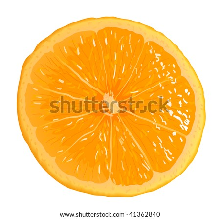 Citrus Fruit. Serio of images. Look my portfolio for reception of many images at this theme. - stock vector