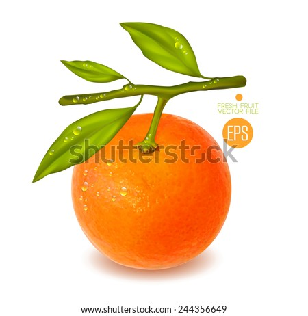Citrus isolated on white background, beautiful fresh fruit. Vector realistic illustration for advertising, packaging carton, bottle, banner, wallpaper. - stock vector