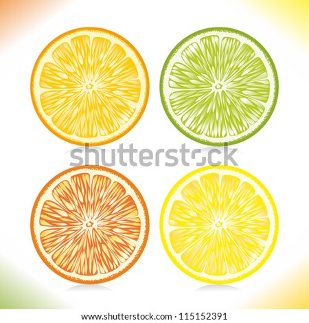 Citrus slices. - stock vector
