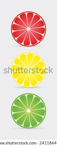 Citrus slices. Vector illustration.