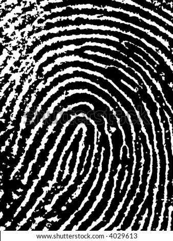 Close crop of a Fingerprint - Very accurately scanned and traced ( Vector is transparent so it can be overlaid on other images, vectors etc.) - stock vector