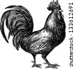 Cock - stock vector