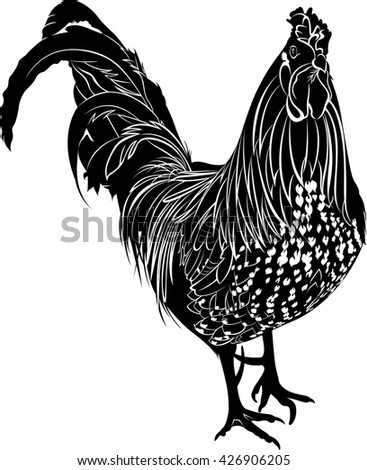 Cock. Poultry rooster. Farmer bird cock. Bird cock. Rooster black silhouette vector isolated on white background. - stock vector