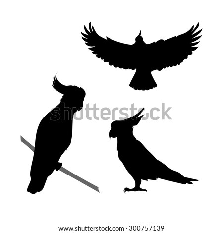 Cockatoo bird vector icons and silhouettes. Set of illustrations in different poses. - stock vector