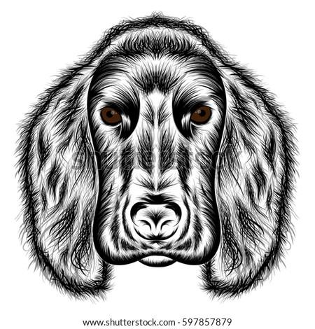 Cocker Spaniel. Vector silhouette of a dog's head