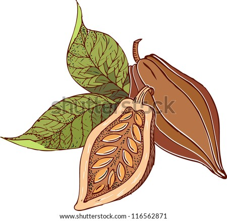 Cocoa beans with green leaves. - stock vector