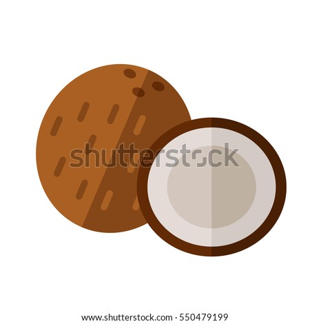 Coconut drupe with half section vector illustration. Superfood cocoanut icon. Healthy detox natural product. Flat design organic food.