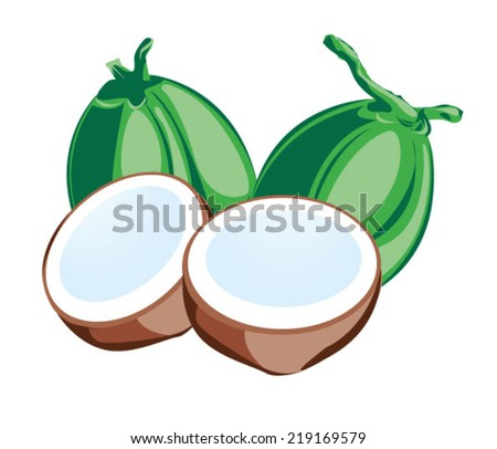Coconut, one of famous tropical Thai fruit - stock vector