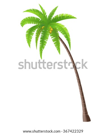 Coconut palm tree on white background, vector illustration - stock vector