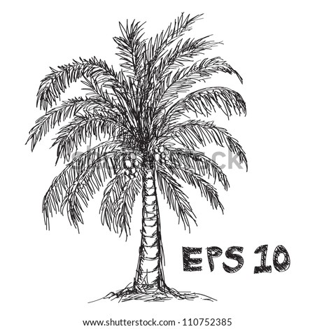 coconut tree Drawing - stock vector