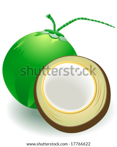Coconut - Vector