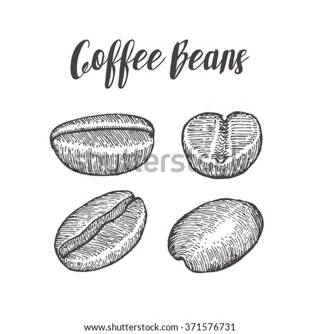 Coffee bean, coffee seed,coffee natural organic caffeine. Coffee fruit. Coffee Hand drawn vector illustration on white background. Coffee vector. Coffee emblem. Coffee logo. Coffee badge. - stock vector