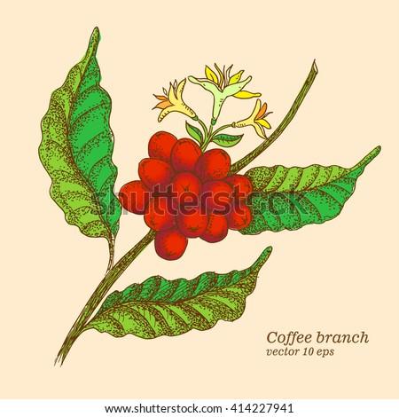 Coffee branch. - stock vector