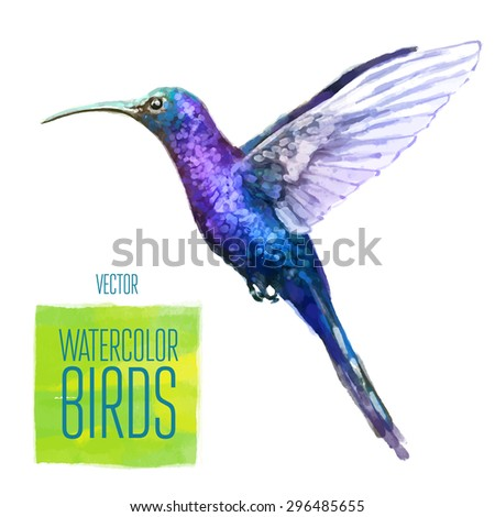 Colibri watercolor  bird isolated on white background. Vector illustration - stock vector