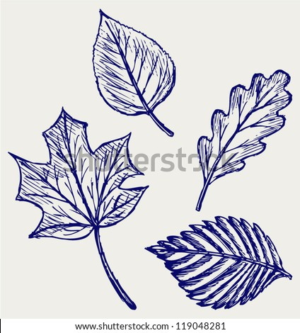 Collection autumn leaves. Doodle style - stock vector