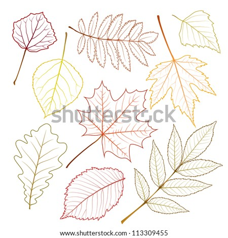 collection beautiful autumn leaves isolated on white background. vector illustration - stock vector
