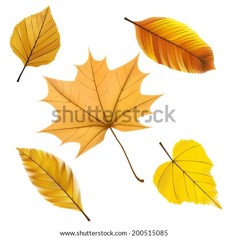 Collection beautiful colorful autumn. EPS10 - stock vector