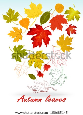 Collection beautiful colorful autumn leaves isolated on white background. Vector illustration.Set of silhouettes of leaf. - stock vector