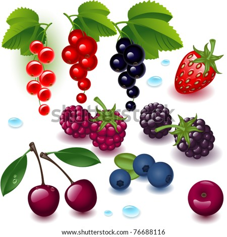 collection. complete set berry on a white background - stock vector