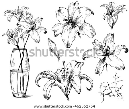 Collection Lily Crack Glass Vase Set Stock Vector Royalty Free