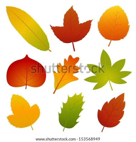 Collection of Autumn Leaves Vector - stock vector