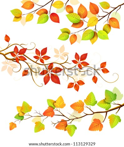 Collection of autumn leaves.Vector illustration - stock vector