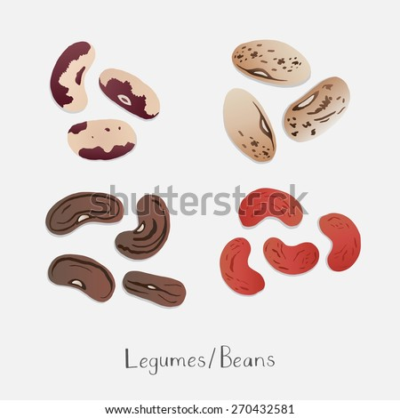 Collection of Beans hand drawn vector  - stock vector