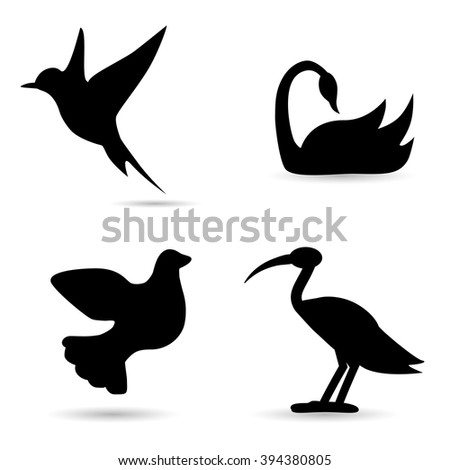 Collection of bird species on white background. Vector art.