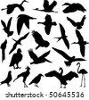 collection of bird vector - stock vector