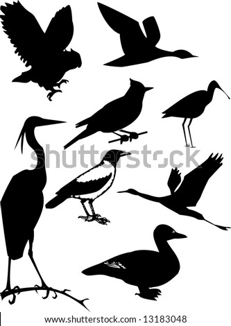 Collection of birds. Vector illustration
