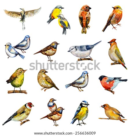 collection of birds. watercolor painting - stock vector