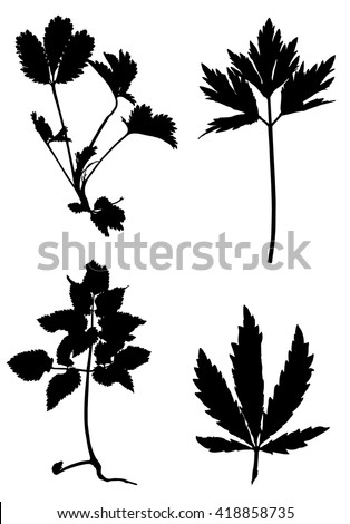 Collection of black silhouettes of plants on white background. - stock vector