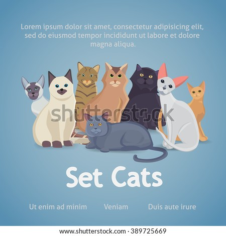 Collection of Cats of Different Breeds.Cat sitting. Cute cartoon kitties or cats sitting. Nice  faces.Group Kittens isolated. - stock vector