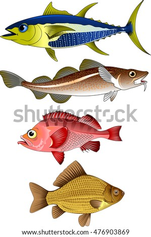 collection of commercial fish on a white background,vector and illustration