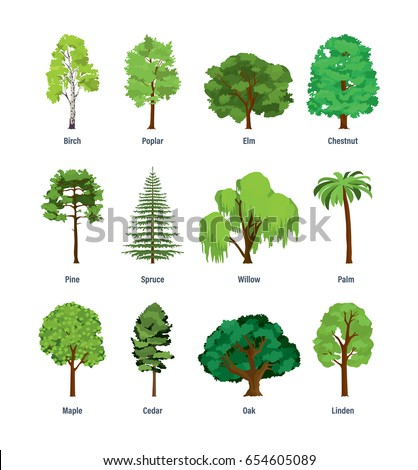 Elm Stock Images Royalty Free Images Amp Vectors Shutterstock