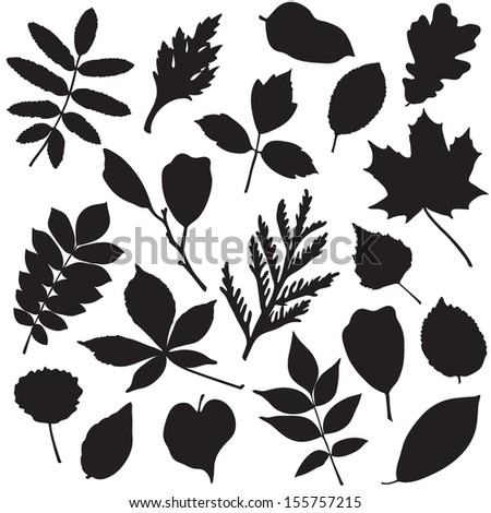 Collection of different leaves silhouettes isolated on white - stock vector