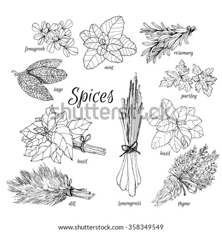 herbs coloring pages - photo#19